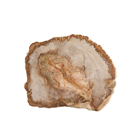 Petrified Wood Platter 14 Inch