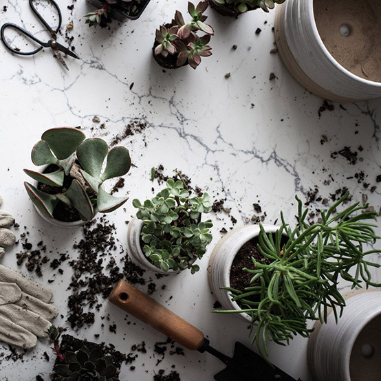 Small Trunk Garden Pot