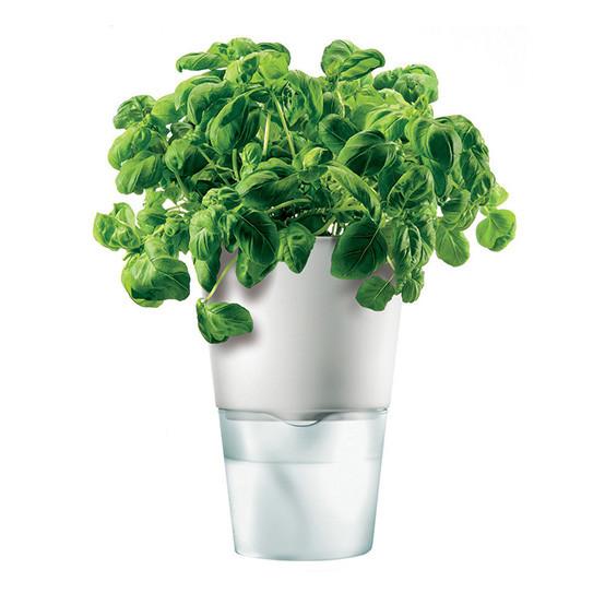 Medium Self-Watering Herb Pot in Chalk White