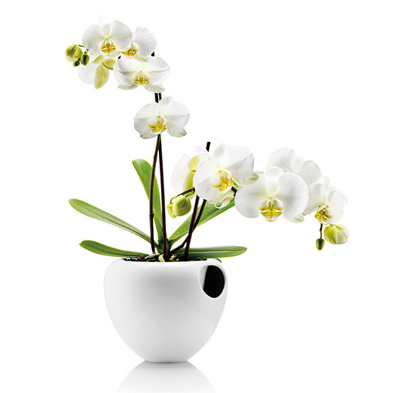 Orchid Pot in White