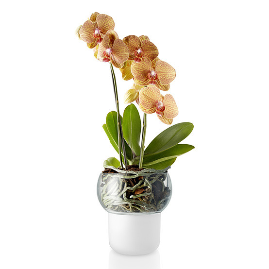 Small Frosted Orchid Pot