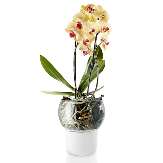 Medium Frosted Orchid Pot