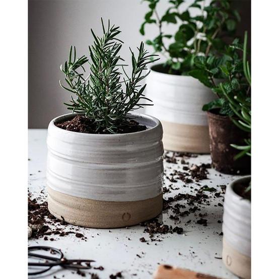 Medium Trunk Garden Pot